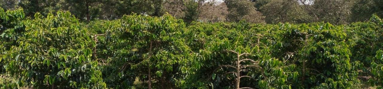 ADC Nai Farm Coffee